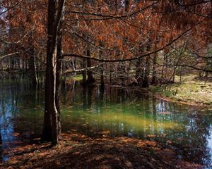Along the Wild Fringe of Skegemog Swamp