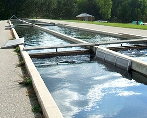 Hike to or from the jordan river national fish hatchery for Fish hatchery michigan