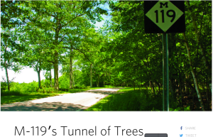 m-119 tunnel of trees