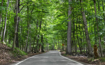Guide to Michigan's Iconic Tunnel of Trees on M-119
