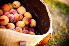 Peach betty