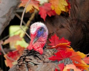 Packages and Deals for a Northern Michigan Thanksgiving Getaway