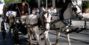 5005-carriage_splash