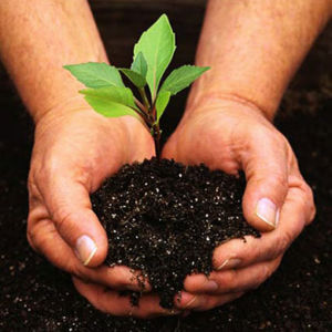 4396-seedling