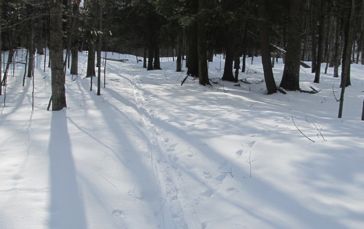 backcountry skiing sleeping bear dunes