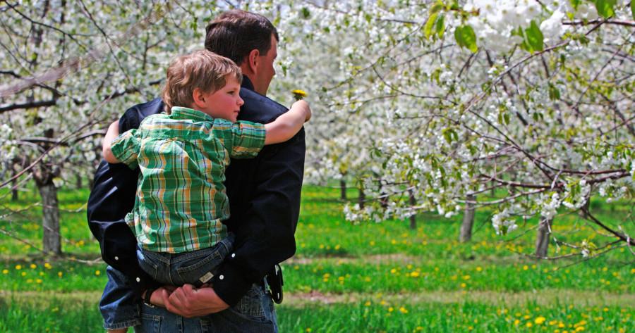 Northern Michigan Cherry