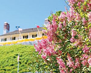 mackinac island lilac festival celebrates the blossoms each june