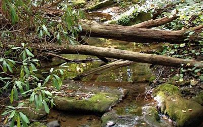 Fishing Tiny Brooks Feeding Northern Michigan's Legendary Trout Rivers