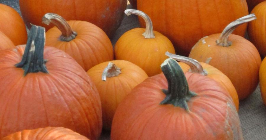 michigan pumpkin patches
