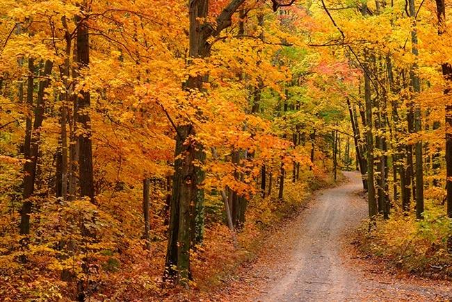 Tunnel of Autumn Trees at Sleeping Bear Dunes – MyNorth.com