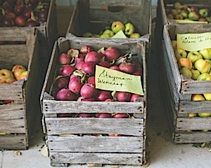 apples in crates small