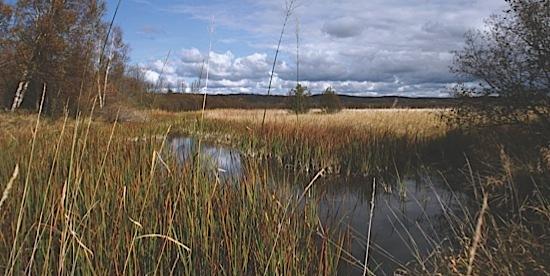 Arcadia Marsh Preserve