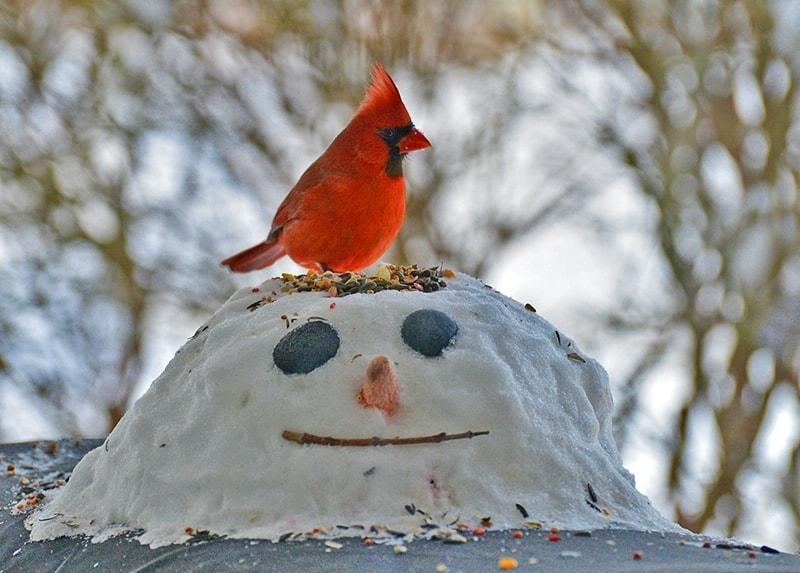 cardinal_snowman