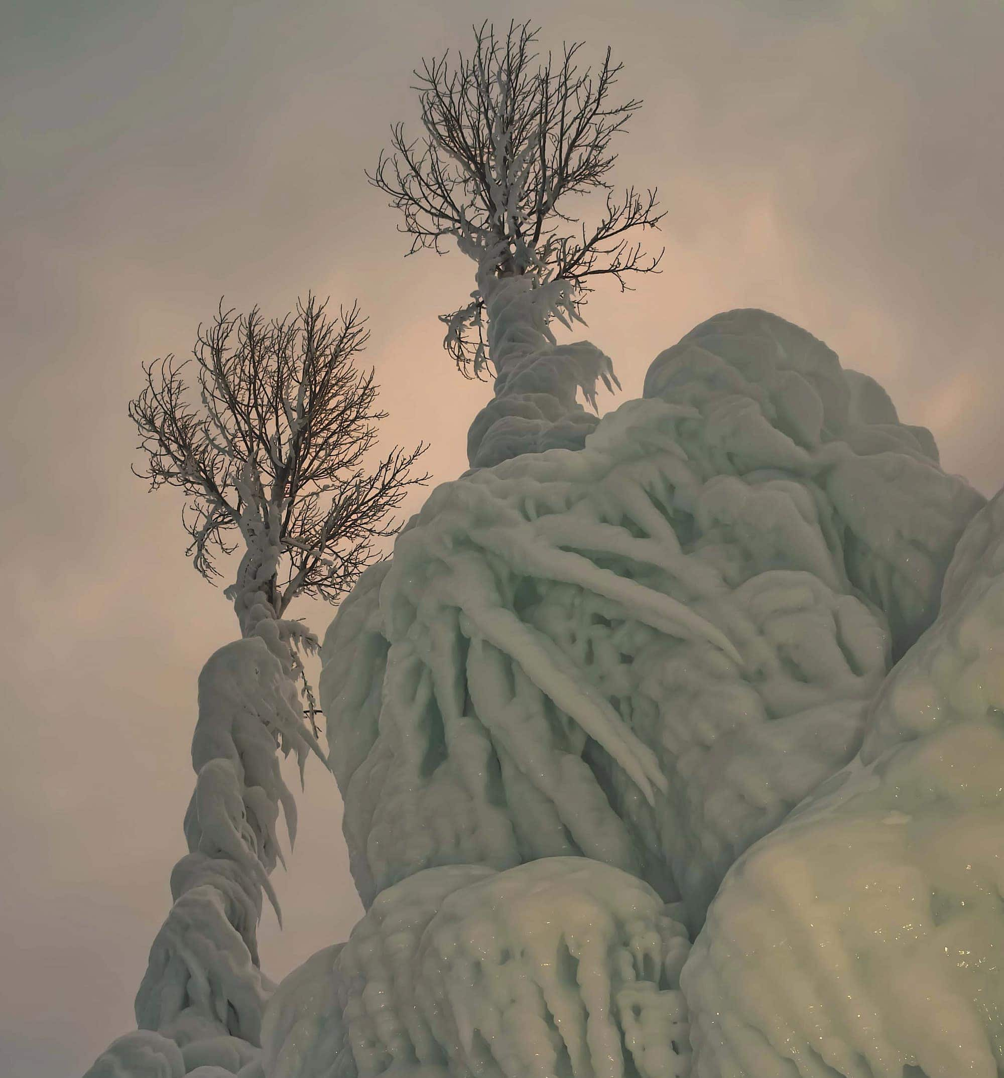 TVM0214_ICETREES