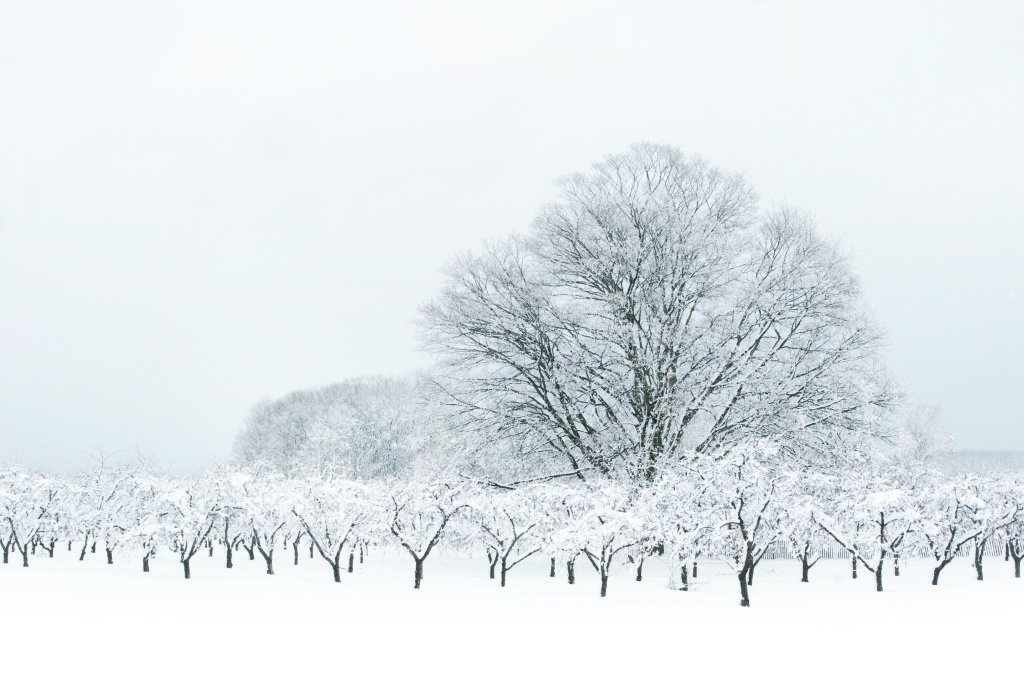 TVM0214_SNOWYTREES