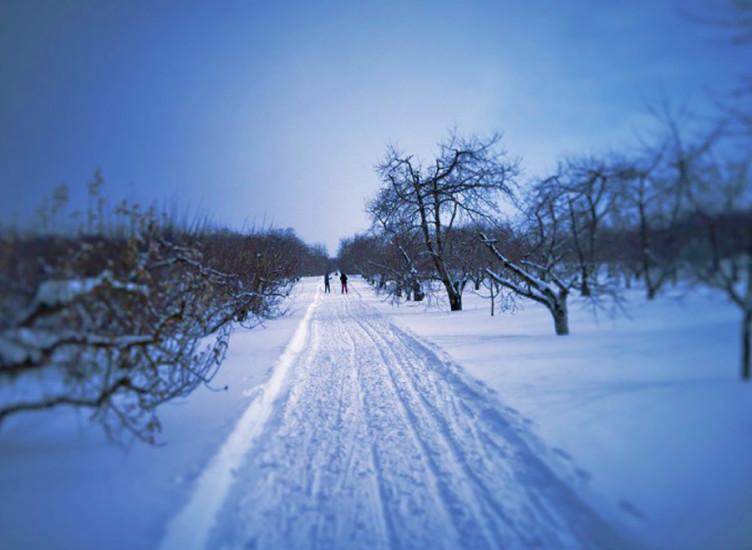 blackstar_snow