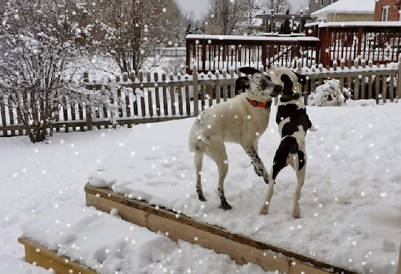 Dogs-n-SNOW