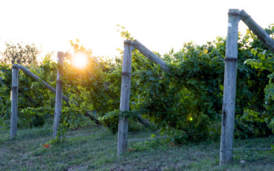 Great Lakes Freezing: How Northern Michigan Vineyards and Orchards Survived Extreme Winter