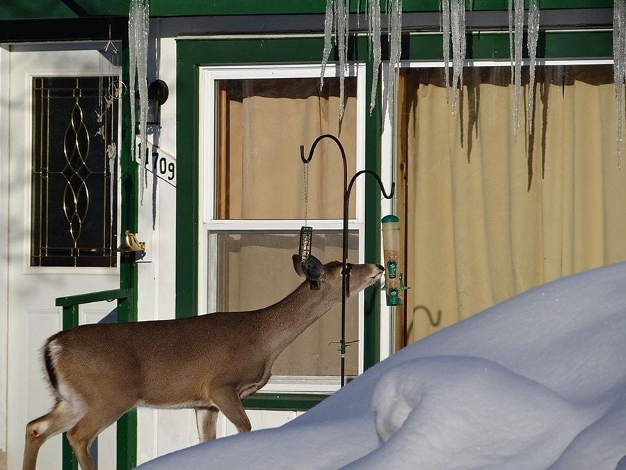 deer_feeder