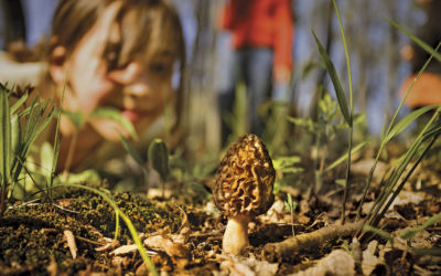 Morel Mushrooms: How to Find, Store and Cook Morels