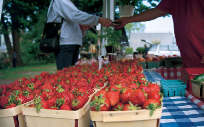 Where to Find Your Nearest Northern Michigan Farmers Market