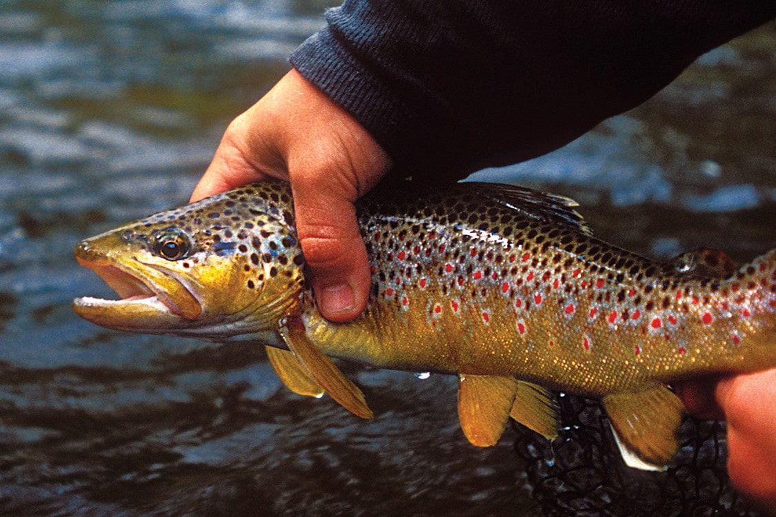 Northern michigan fly fishing ausable fly shop 39 s river for Farmers almanac fishing report