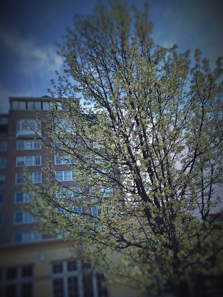 downtownblossoms