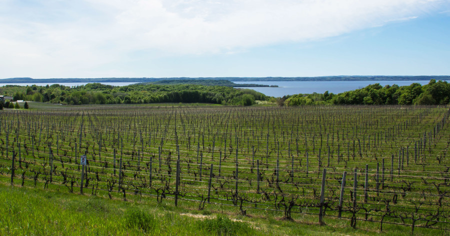 Northern Michgian Vineyard