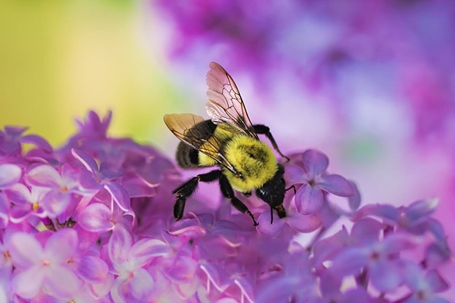 springbumblebee