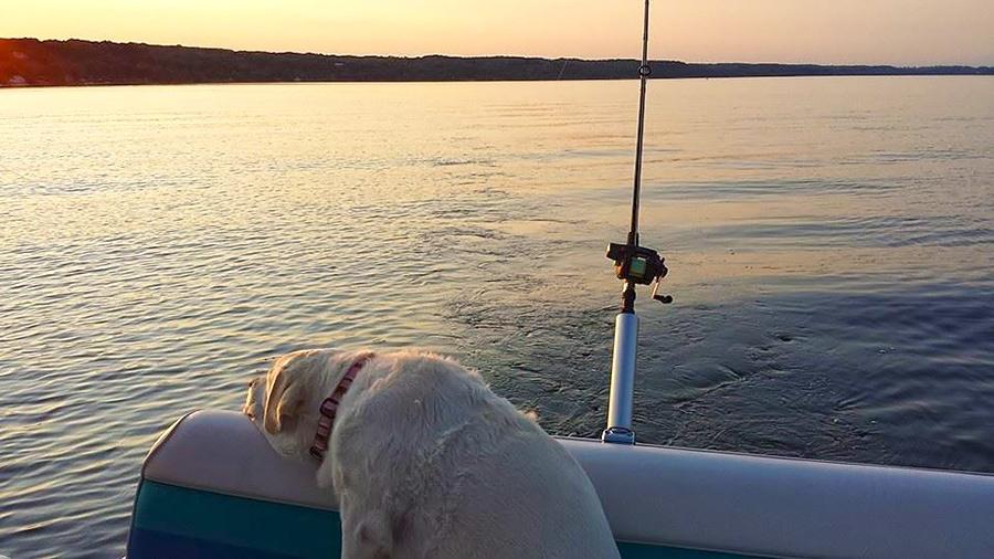 dog_fishing