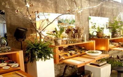 Fresh Home Decorations at Terrarium Bar in Traverse City
