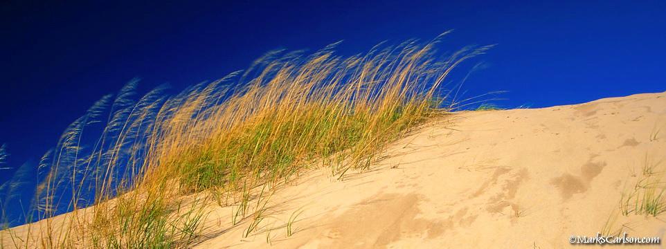 Dune Grasses, Pyramid Dune; ©markscarlson.com_resize