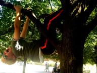Elliot Lamie climbing a tree.
