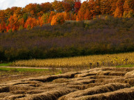 gallaghers_autumn