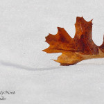leaf_and_snow