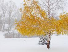 winter_suttonsbay
