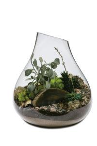 glass_plant