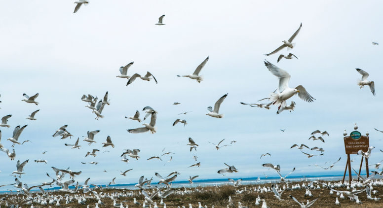 The Science Behind Northport's Gull Island