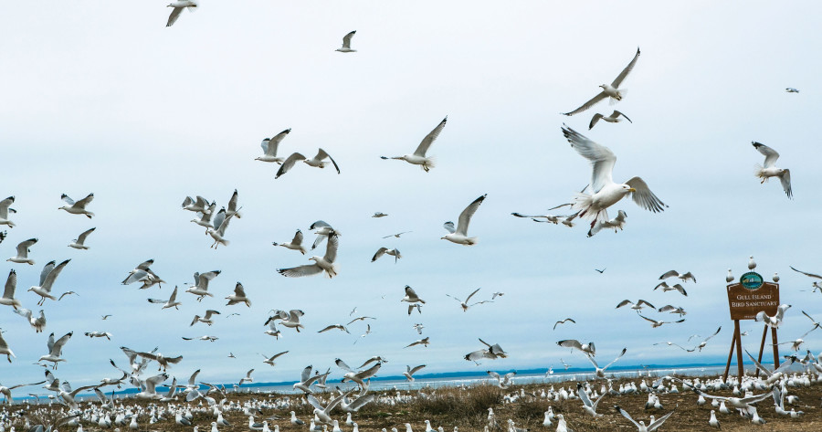 northport gull island