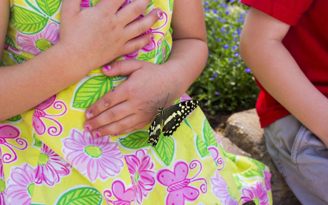 The Buzz at G.T. Butterfly House & Bug Zoo: Learn about the Monarch