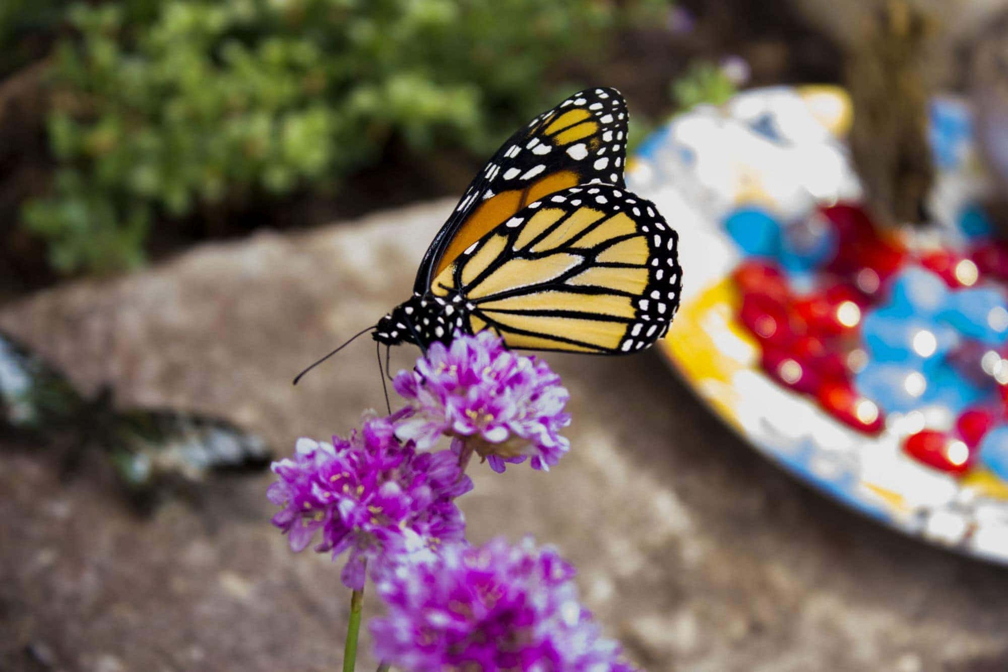 G.T. Butterfly House & Bug Zoo