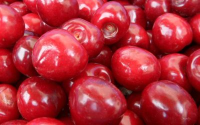 Northern Michigan Tart Cherries Better Than Ibuprofen