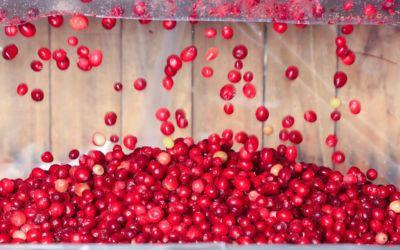 Graceland Fruit Gives the World a Taste of Frankfort