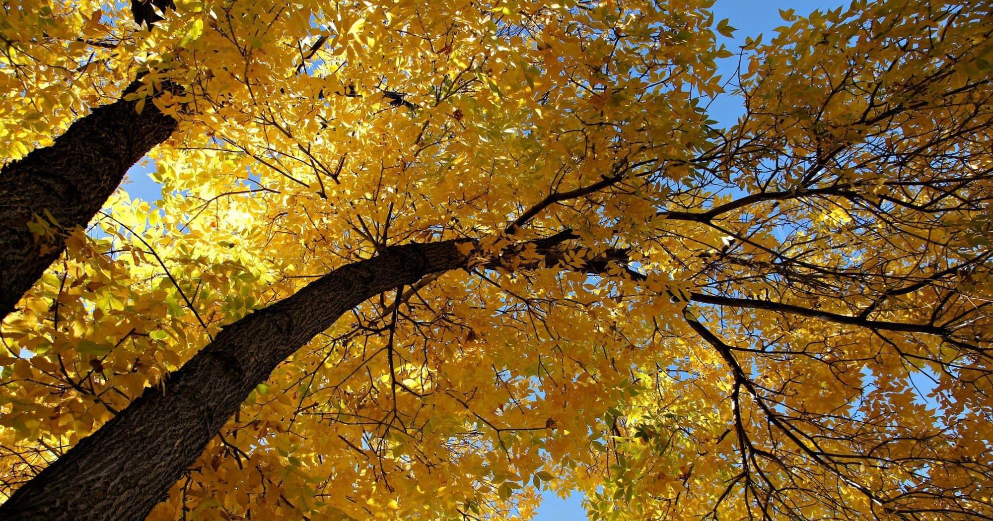 fall september peninsula upper vacation trees individuell plan island mackinac mynorth helse om kommune lillehammer amotherworld changing rus psykisk og