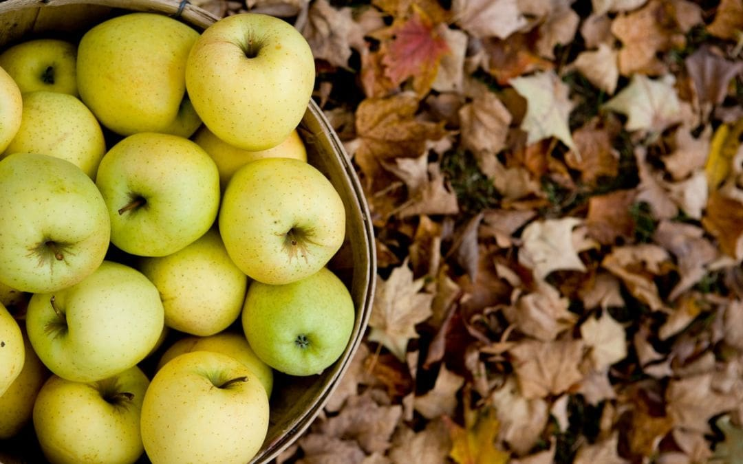 places to buy apple cider in northern michigan