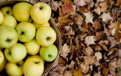 10 Places to Buy Apple Cider in Northern Michigan