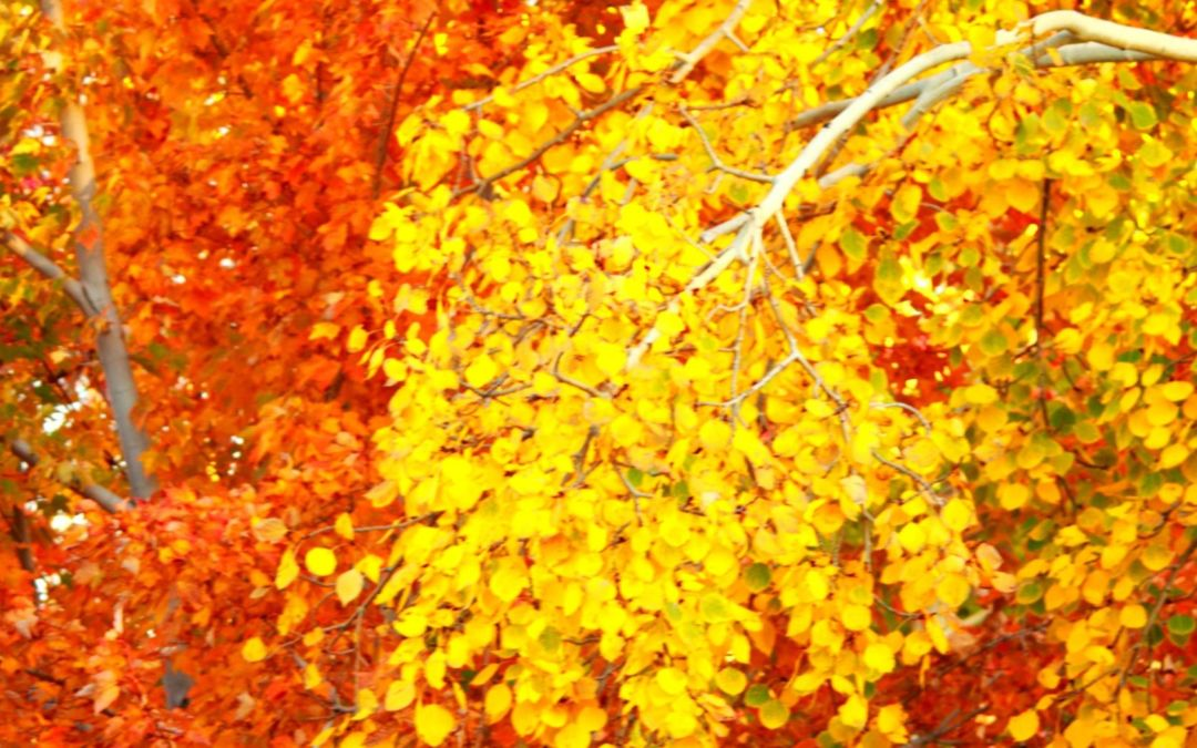 Keweenaw Excursions in Charlevoix: 3-Day Fall Color Tour