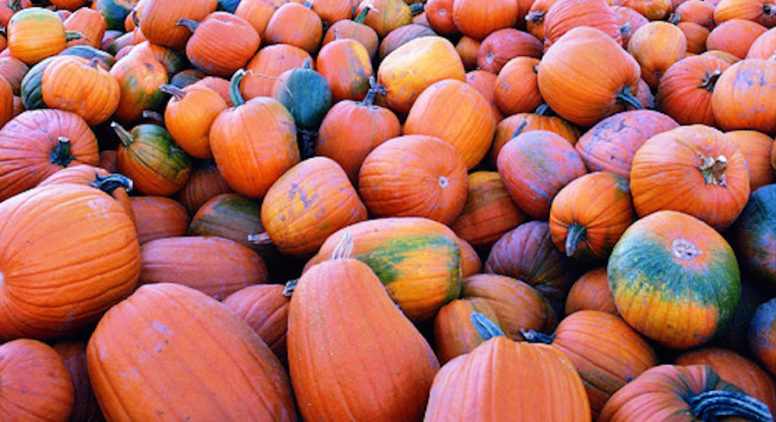 10 Northern Michigan Pumpkin Patches  (& Corn Mazes, too!)