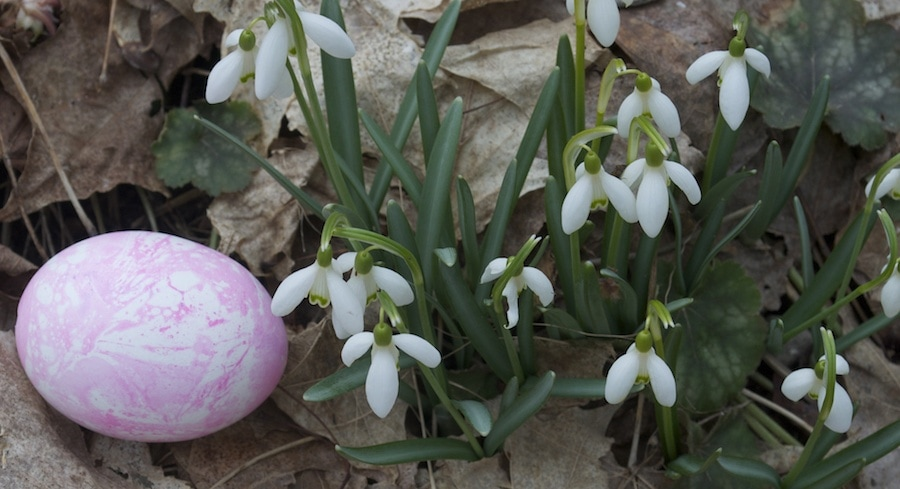 Northern Michigan Easter egg hunts