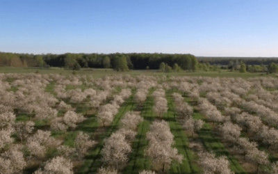 Video: Spring Cherry Blossoms in Benzie County
